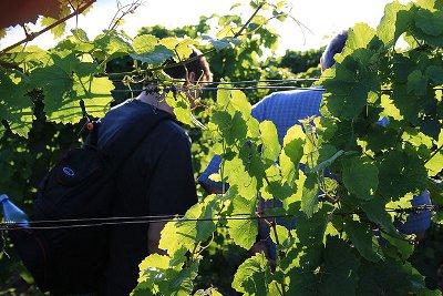 Thomas Eser und unser Team auf dem Weinberg des Weingut Eser